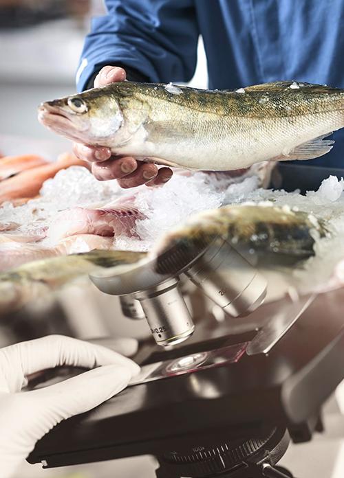 Качественная рыба оптом